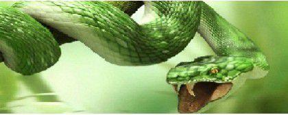 Snakes Repeller