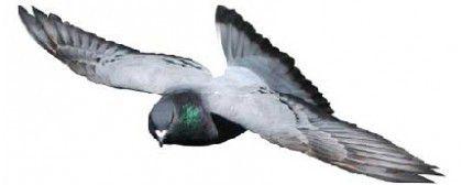 Pigeon Repellers